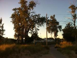 The Lantern Snatching Tree